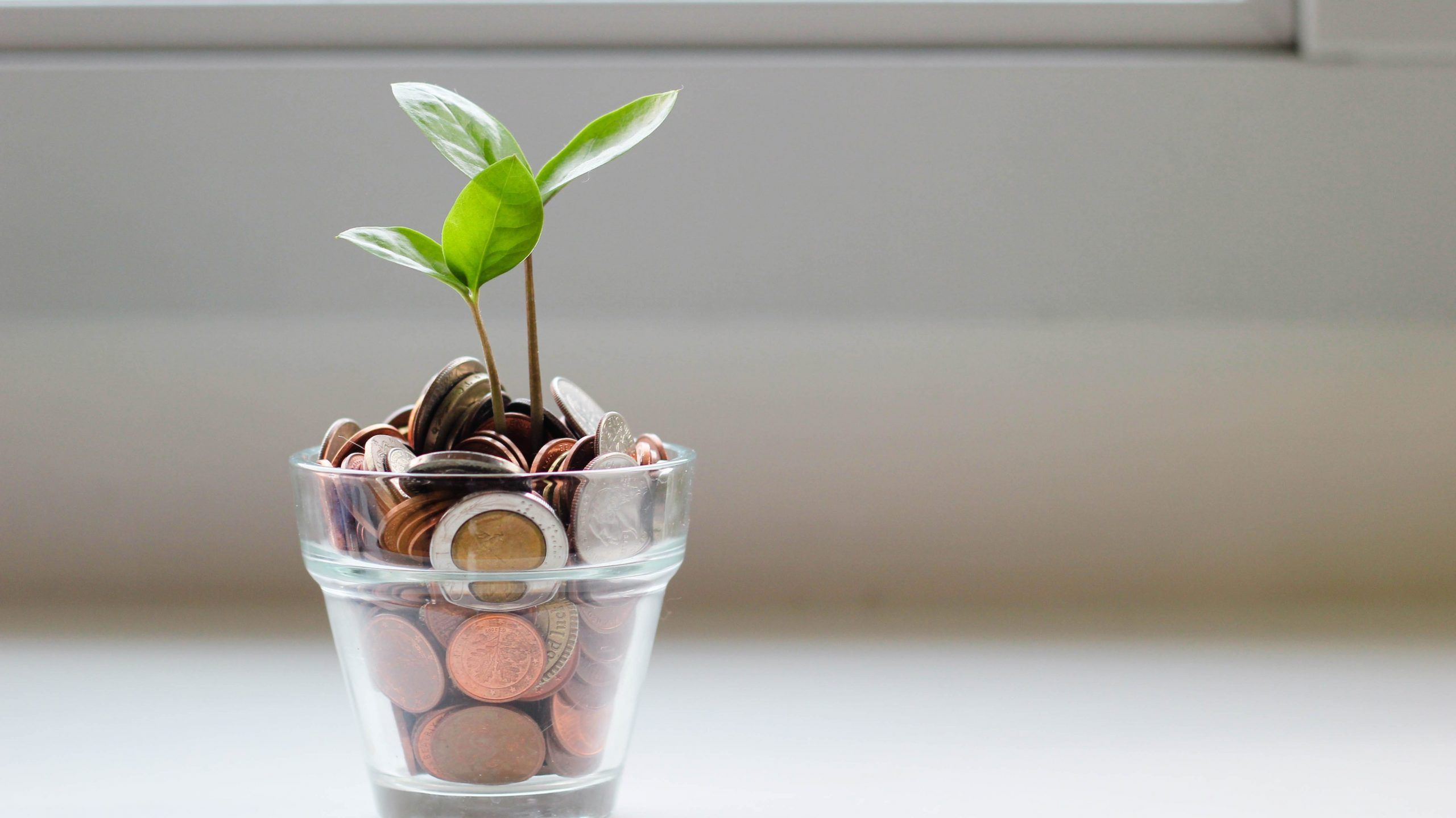 picture of a glass with coins in and a shoot growing out of it
